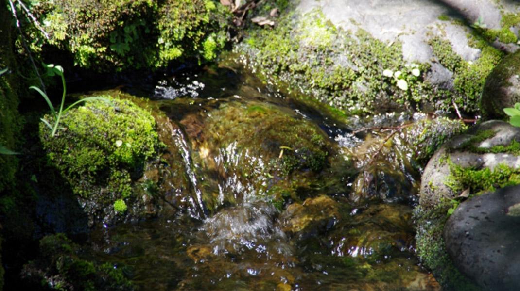 井の頭池の湧き水