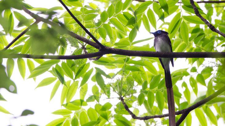 井の頭公園の野鳥