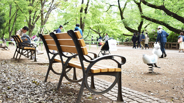 井の頭公園の新緑とベンチ