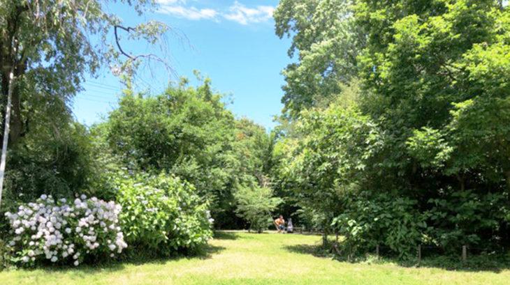 宮本小路公園の森