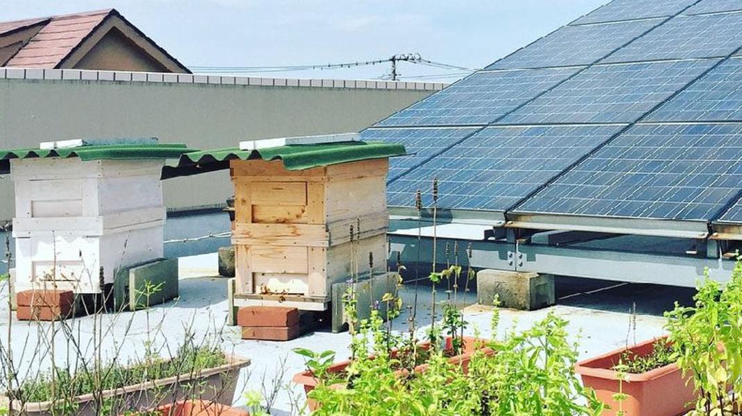 ハニカムプロジェクト屋上の巣箱