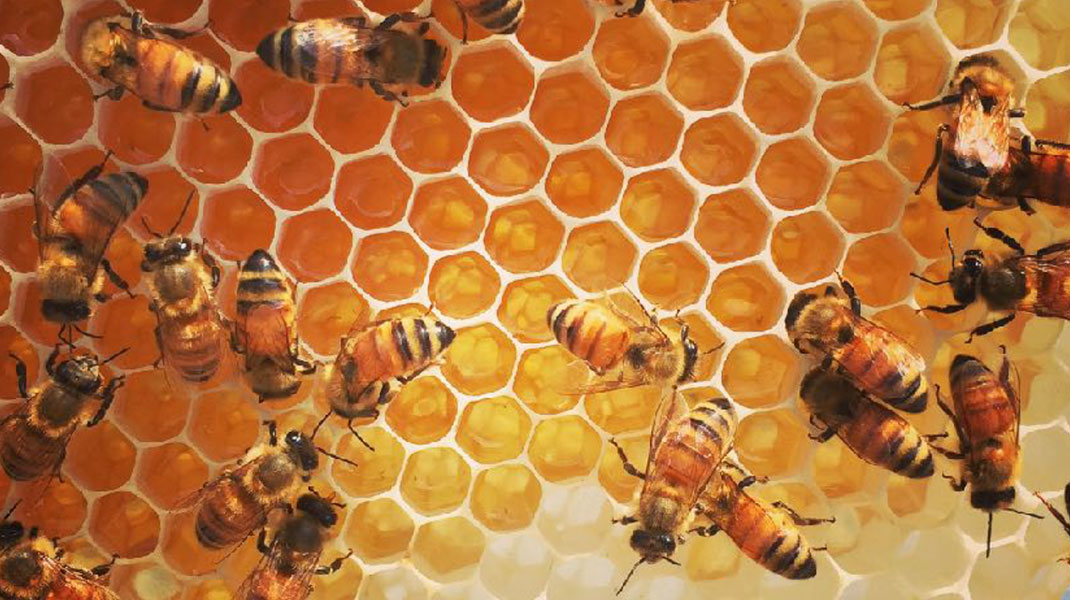 ハニカムプロジェクト蜂の巣