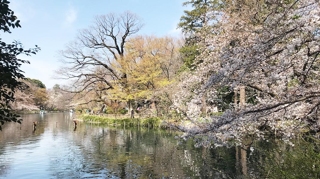 桜0321
