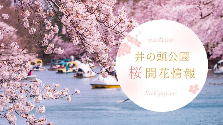 井の頭公園 桜開花情報